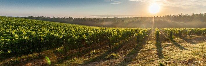 Oenologie (Weinbau und Weinwirtschaft) Studium
