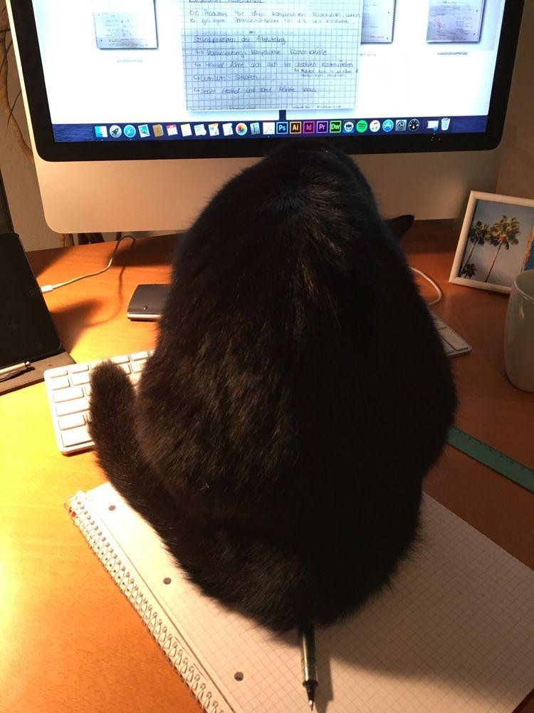 Katze sitzt auf Stift