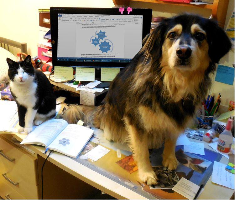 Katze und Hund auf Schreibtisch