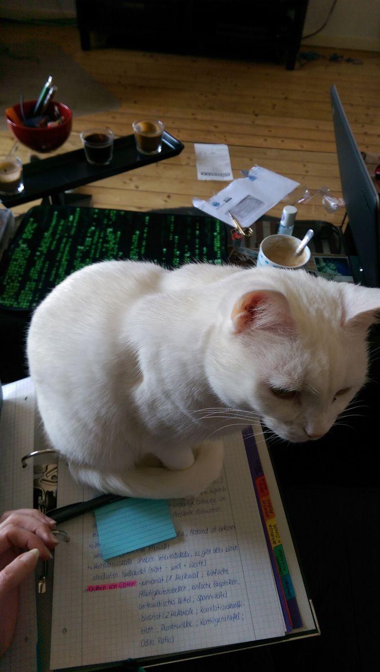 Katze Pia