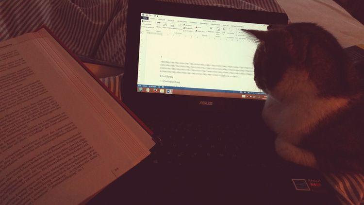 Katze vor PC