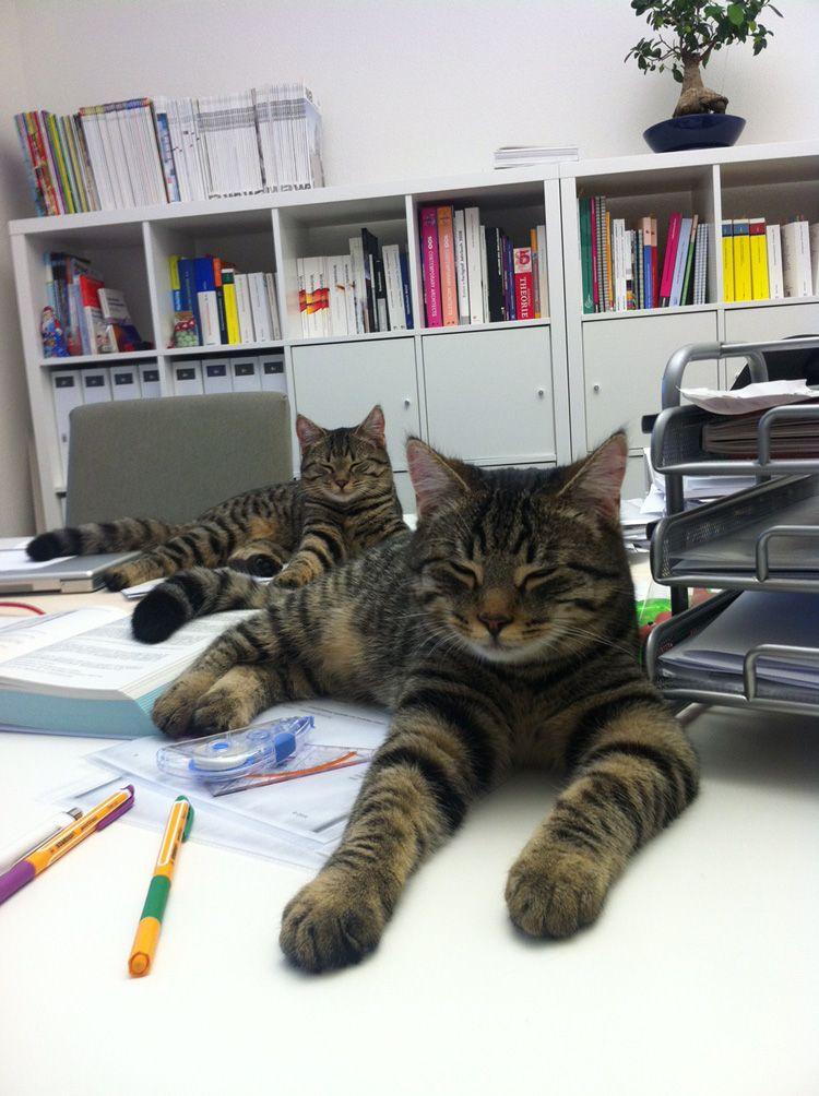 Katzen auf Schreibtisch